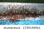 Ant war between two colonies of ...