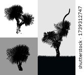 Three stylized designs of the unique Australian Grass Tree (Xanthorrhoea preissii). The plant is native to Western Australia. Other common name is called Balga. Can be used as product label or logo.