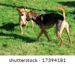 playful greeting with wagging... | Shutterstock . vector #17394181