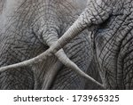 Closeup Of Two Elephants...