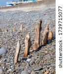 Weathered Wooden Poles  Groyne...
