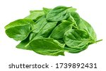 Spinach Isolated On White...