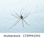 Spider On A White Wall ...