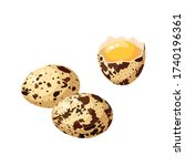 Quail Eggs With Spotted Shell ...