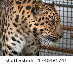 jaguar before the attack on the ... | Shutterstock . vector #1740461741