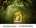 Tunnel Of Trees In Gardens Of...