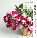 red and white roses   Shutterstock . vector #17405107