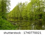 A view of a lake or river flowing through a dense forest or moor with a single fallen down tree laying next to the bank overgrown with shrubs and other flora seen in spring in Poland