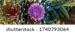 Artichoke Plant Grows On Bed In ...