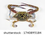 The Flower Crab Or Blue Crab ...
