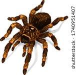tarantula spider black brown... | Shutterstock .eps vector #1740951407