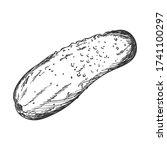 sketch of a fresh cucumber....   Shutterstock .eps vector #1741100297
