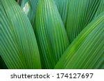 Palm Leaf  Palm Leaves Texture...