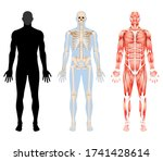 human body skeleton and... | Shutterstock .eps vector #1741428614