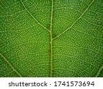 Macro Cellular Tree Leaf Fractal