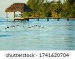 Belize Pelicans Ocean Dock View