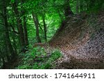 Mysterious Hiking Path Full Of...