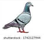 Vector Drawing Dove In Color