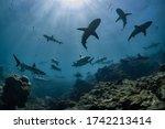 Small photo of School of sharks swim overhead, shark attack, shiver, pack, hunting, Ningaloo Reef, Western Australia