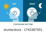 the circadian rhythm and sleep... | Shutterstock .eps vector #1742387501