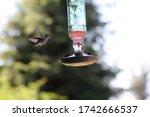 Bird Feeding In Santa Rosa...