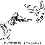 Three Doves Flying Poses Sketch