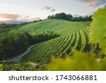 Vineyard At Sunset  Friuli...
