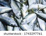 Fresh Mackerel Fish In Market ...