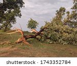 An Uprooted Tree Is A Tree Tha...