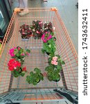 Shopping Cart Of Spring Plants...