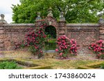 Roses Growing Along Side A...