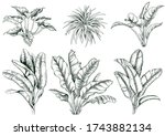 collection of tropical large...   Shutterstock .eps vector #1743882134