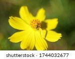 ladybug bug flower yellow... | Shutterstock . vector #1744032677