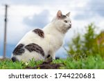 White Spotted Cat Sitting On...