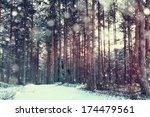 Pine Forest  Winter  Snow