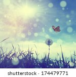 Stock photo butterfly and dandelion 174479771