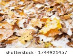 Autumn Leaves With Snow At...