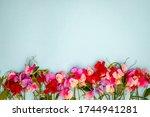 Pink Sweet Pea Lathyrus...
