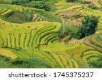 Landscape Terraced Rice Fields...