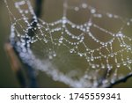 Small photo of Macro shot of a toils of a spider with transparent dew drops on it. The spiderweb is located on the branches of a tree