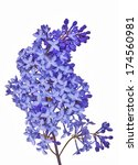 Stock photo blue lilac flowers isolated on white background 174560981