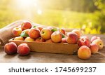 Fresh Ripe Peaches With Leaves...