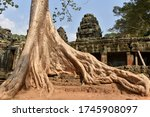 Giant Silk Cotton Tree Roots...