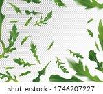 arugula leaves background.... | Shutterstock .eps vector #1746207227