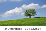 single tree on the spring meadow | Shutterstock . vector #174622694