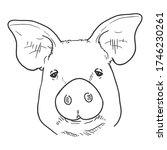 vector sketch pig face. front... | Shutterstock .eps vector #1746230261