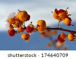 Frozen Berries With Ice And Snow