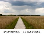 Boardwalk Path In Marshland...