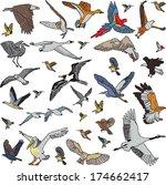 color birds set seamless... | Shutterstock .eps vector #174662417