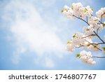 Blue Sky And Cherry Blossom...